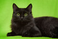 Black Cat With Green Eyes Lying On Blanket Royalty Free Stock Image - 36143766