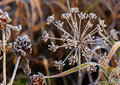 Frost On Grass Stock Photos - 36151293