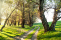 Summer Forest With Sun And Dirt Road Stock Photos - 36192513