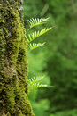 Nurseling Fern Leaves Royalty Free Stock Photography - 3621487