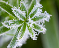 Green Grass Covered With Hoarfrost Royalty Free Stock Photos - 36212628