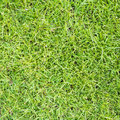 Lawn ( Real Grass ) Stock Image - 36234681