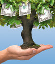 Money Tree - One Hundred Dollar Royalty Free Stock Photography - 36244757