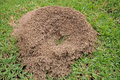 Ant S Nest Stock Photos - 36250303
