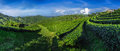 Panoramic Shot Of Green Tea Plantation Royalty Free Stock Image - 36280656