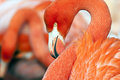 Flamingo Stock Image - 36297841