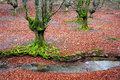 Trees With Twisted Green Tree Roots And Moss Stock Photos - 36331403