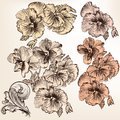 Set Of Vector Detailed Flowers For Design Royalty Free Stock Image - 36341526
