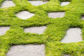 A Stone Path In The Green Grass Park Garden Stock Image - 36344891