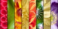 Collage Of Flowers In Stripes Stock Photos - 36374293