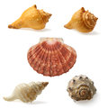 Seashell Collection Royalty Free Stock Image - 36380756