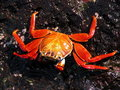 Crab On Rock Royalty Free Stock Photography - 3647597