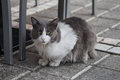White And Gray Cat Stock Images - 36408114
