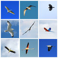 Set Of Flying Birds Stock Photography - 36438932