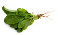 Fresh Spinach Stock Photography - 36445102