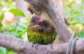 Parrots In Love Stock Photography - 36460292