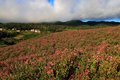 Flower Field Stock Images - 3657354