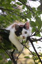 Cute Kitten Resting On The Tree Branch Royalty Free Stock Photos - 36522538