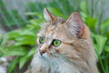 Cat With Green Eyes Stock Photo - 36581830