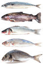Fish Collection Stock Photography - 36599342