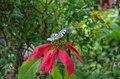 Tropical Butterfly Stock Images - 36615964