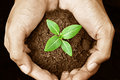 Hand Holding Young Plant Royalty Free Stock Photos - 36649618
