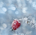 Frozen Hip Stock Images - 36650044