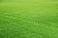 Mowed Football Ground, Green Lawn Background Royalty Free Stock Image - 36679156