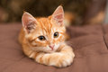 Small  Kitten Lie On The Bed Royalty Free Stock Image - 36682306