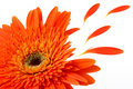 Flower Close Up Royalty Free Stock Image - 3673736