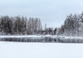 Lake And Frozen Trees At Winter Royalty Free Stock Photos - 36700918