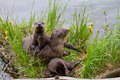Curious River Otter Mom And Pups Family Stock Photography - 36706092