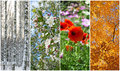 Winter, Spring, Summer, Autumn. Four Seasons. Stock Images - 36769544