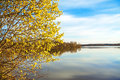 Spring Landscape With A Blossoming Tree And The River Royalty Free Stock Photography - 36789917