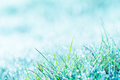 Morning, Grass And Hoar Frost Stock Images - 36797104