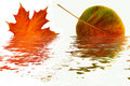 Reflection Of Autumn Leaves. Stock Photography - 3681742