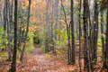 The Quiet Path Royalty Free Stock Photo - 36803655