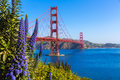 Golden Gate Bridge San Francisco Purple Flowers California Royalty Free Stock Photography - 36805947