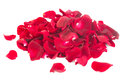 Pile Of  Rose Petals Royalty Free Stock Images - 36852979