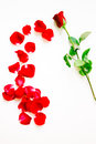 Red Rose Petals Royalty Free Stock Photo - 36874175