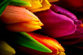 Tulips Rainbow Mixed Bunch Close-up Waterdrops Wet Royalty Free Stock Photography - 36876897
