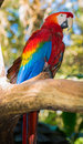 Tropical Bird Royalty Free Stock Images - 36882089