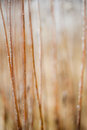 Frosted Grass And Plants Royalty Free Stock Photos - 36892508