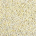 Barley Stock Photo - 36899360