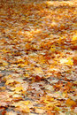 Fall Leaves Stock Images - 3693264