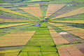 Spider Web Rice Paddy Field Royalty Free Stock Image - 36904896
