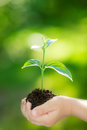 Young Plant Against Green Background Stock Photography - 36920242