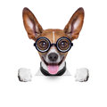 Dumb Crazy Dog Royalty Free Stock Images - 36941939