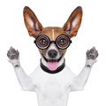 Dumb Crazy Dog Royalty Free Stock Photo - 36942095