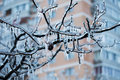 Frozen In The Ice Branches Royalty Free Stock Photos - 37018528
